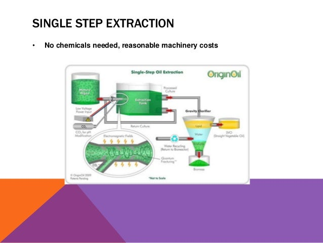 Biodiesel From Algal Oils