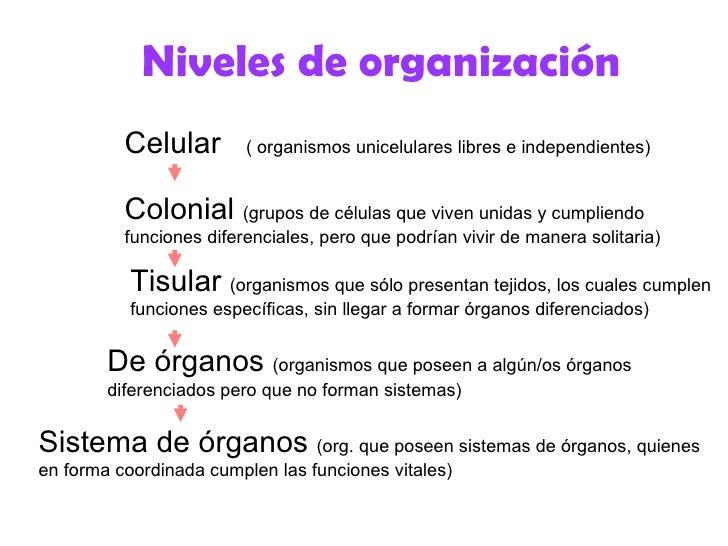Niveles de organización          Celular        ( organismos unicelulares libres e independientes)          Colonial (grup...