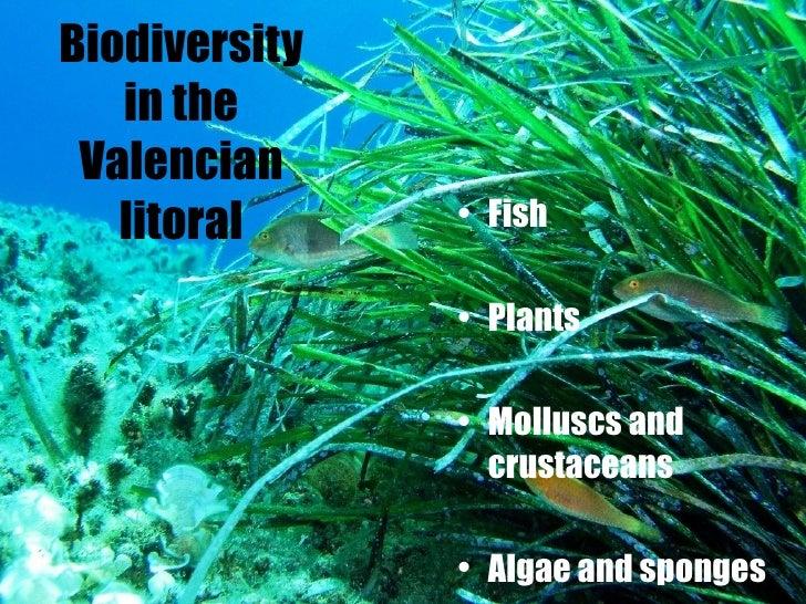 <ul><li>Fish </li></ul><ul><li>Plants </li></ul><ul><li>Molluscs and crustaceans </li></ul><ul><li>Algae and sponges   </l...