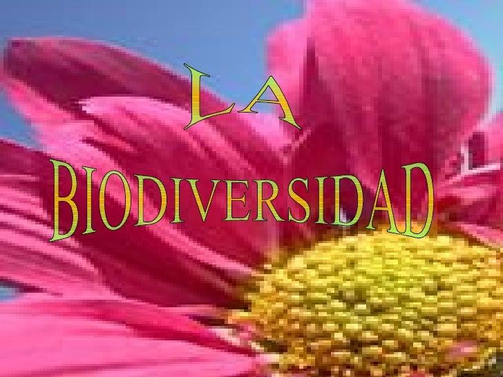Biodiversidad (Jensy y Katy)