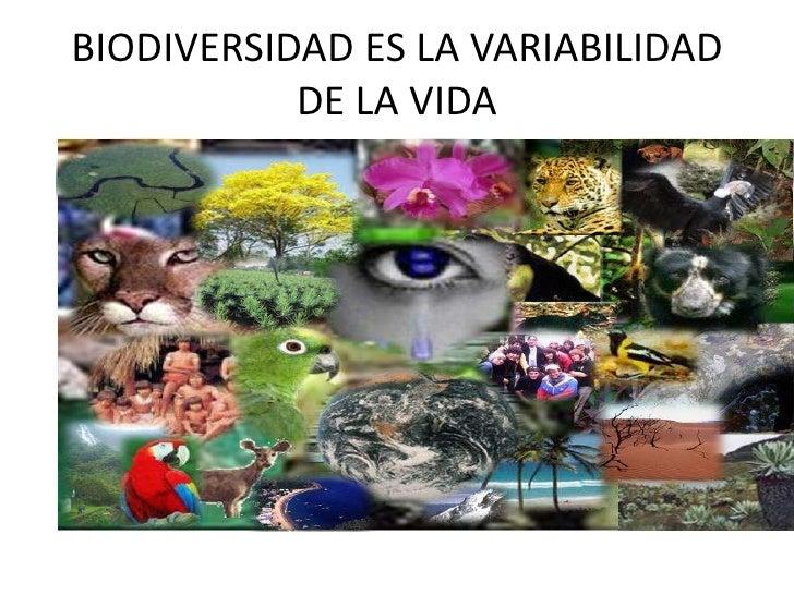 BIODIVERSIDAD ES LA VARIABILIDAD DE LA VIDA<br />