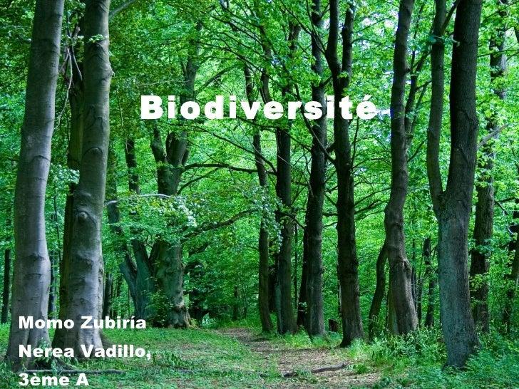 Biodiversité Momo Zubiría Nerea Vadillo, 3ème A