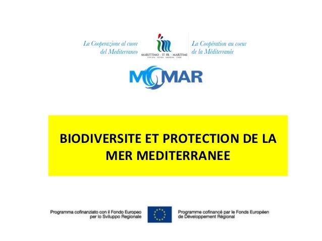 BIODIVERSITE ET PROTECTION DE LA      MER MEDITERRANEE