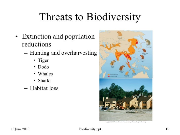 Mangrove forests: threats