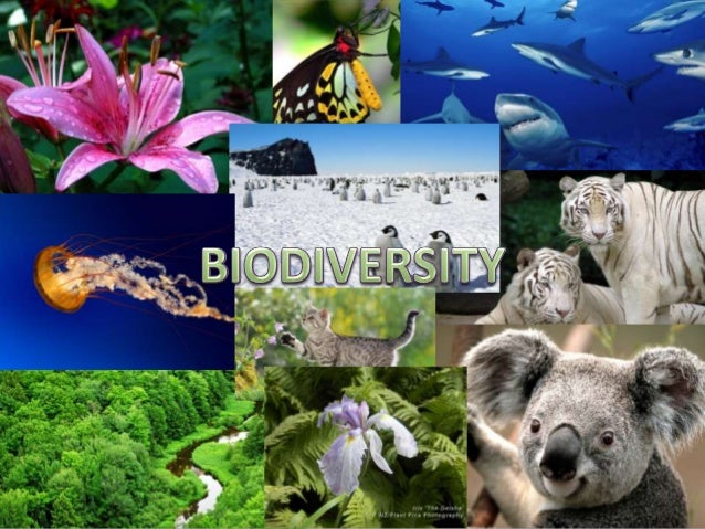 CONTENTS1. Introduction2. Concept of Biodiversity and its types3. Distribution of Biodiversity4. Biodiversity and balance ...