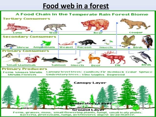 Bioersity ecosystem