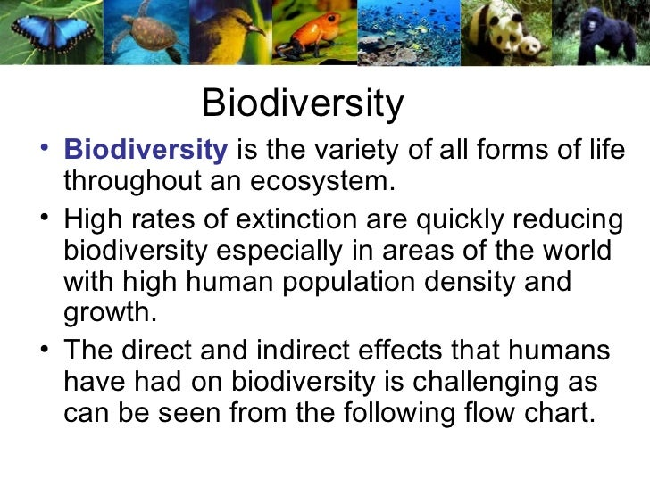 Help me choose a topic relating to biodiversity?