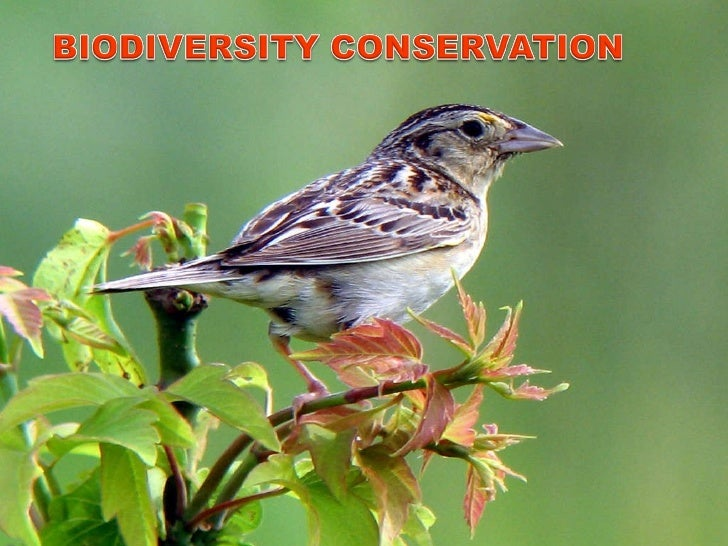 value of biodiversity essay 1 thi s essay confines i telf t o discussing wild species diversi y  finally, there is the existence value of biodiversity this may be negligible for the  last source of value, the preference of an elite minority, that has been the principal driver of policies to conserve biodiversity in india these have taken the form of legislation such as the wildlife protection act of 1972 and its various amendments and.