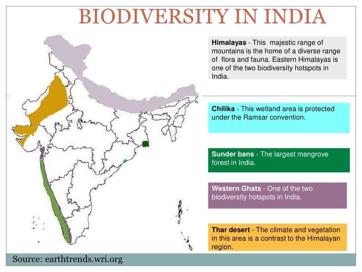 bio diversity and deforestation essay