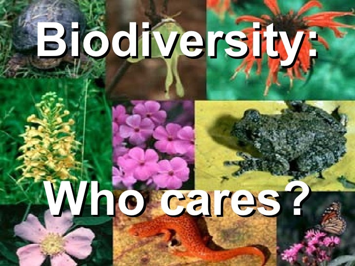 Biodiversity Who Cares Slide Show