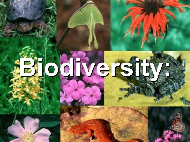 Biodiversity slide show.key