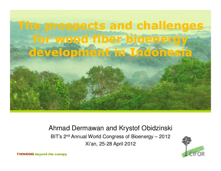 The prospects and limitations for wood fibre bioenergy development in Indonesia