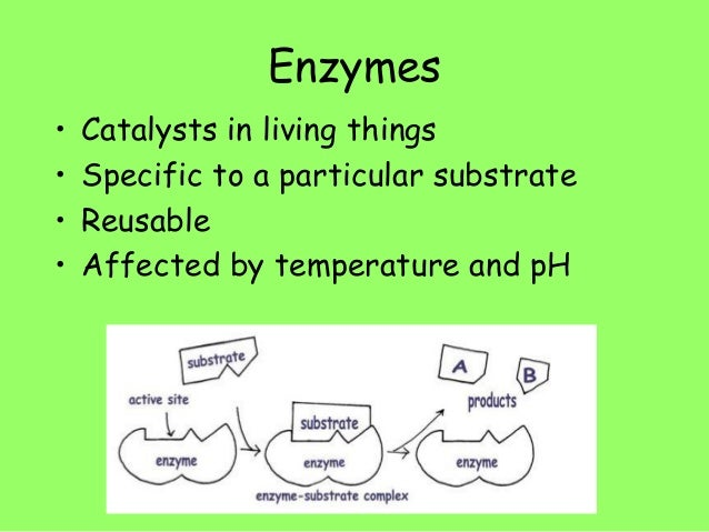 biology practical for catalyse Biology practical biology practical biology practical home microbiology practical catalase test for identification of bacteria: principle, procedure.