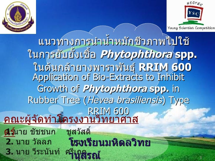 LOGO          แนวทางการนำานำำาหมักชีวภาพไปใช้      ในการยับยัำงเชืำอ Phytophthora spp.       ในต้นกล้ายางพาราพันธุ์ RRIM 6...