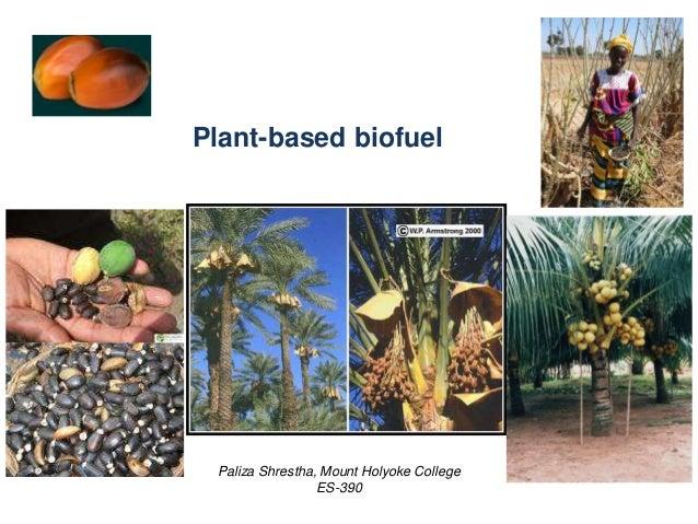 Plant-based biofuel Paliza Shrestha, Mount Holyoke College ES-390