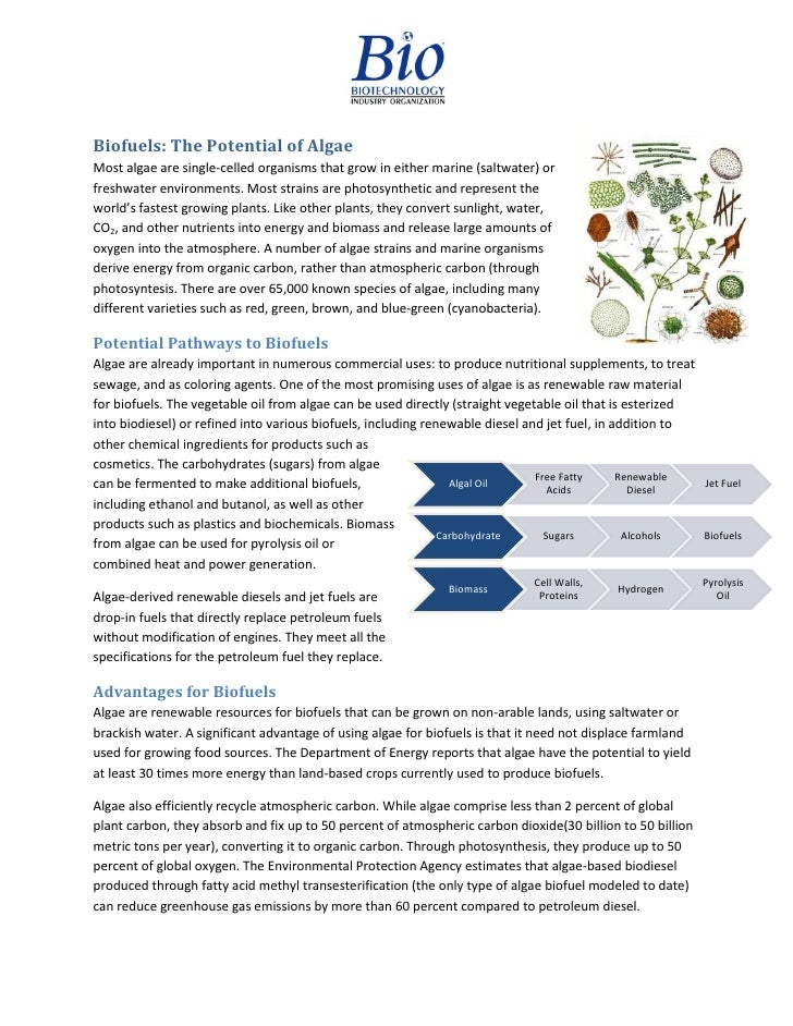 Biofuels: The Potential of AlgaeMost algae are single-celled organisms that grow in either marine (saltwater) orfreshwater...