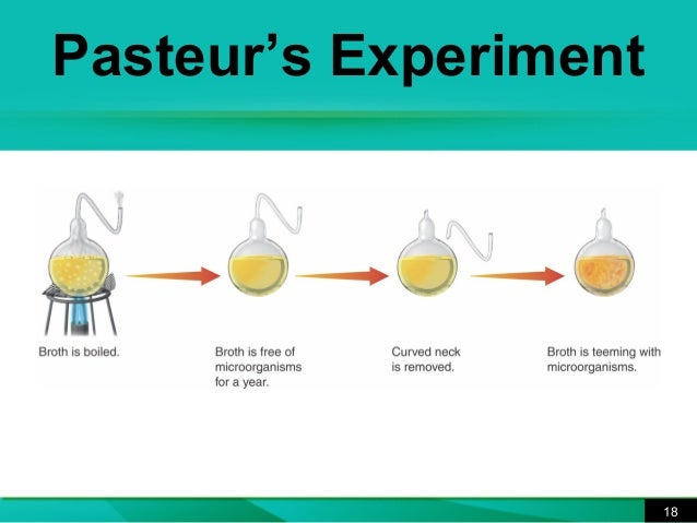 Louis pasteur spontaneous generation experiment