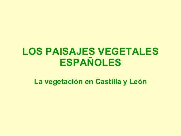 LOS PAISAJES VEGETALES      ESPAÑOLES La vegetación en Castilla y León