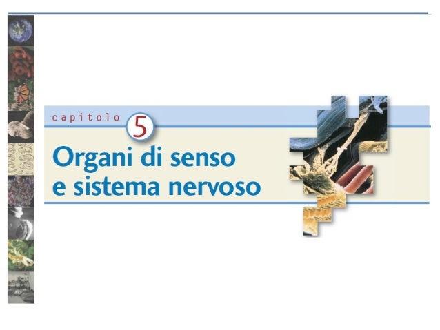 Vedere, capire, interpretare  Il sistema nervoso è formato da: sistema nervoso centrale e periferico. La psicologia studia...