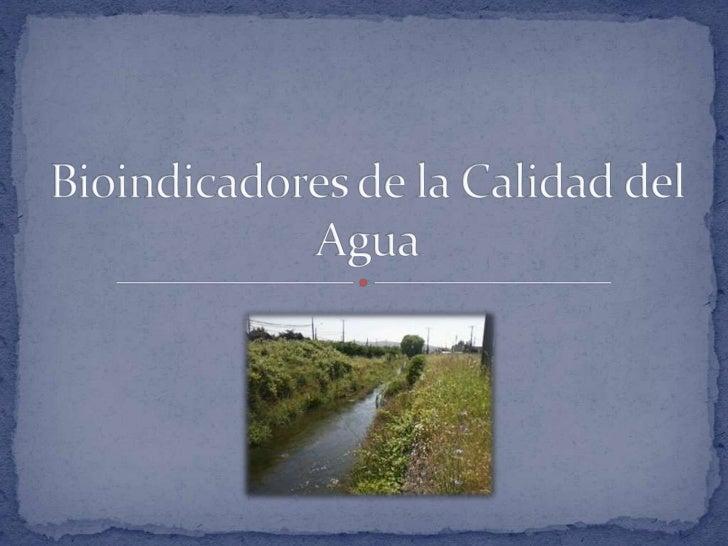 """La calidad del agua tradicionalmente seha medido a través de parámetrosfísico-químicos, los que actúan comouna     """"fotogr..."""