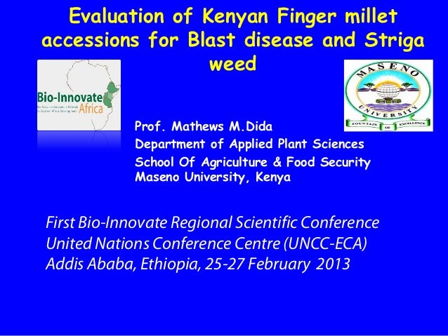 Evaluation of Kenyan Finger milletaccessions for Blast disease and Striga                  weed             Prof. Mathews ...