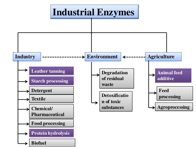 2 applications of enzymes Preparation of dna for traditional cloning methods is dependent upon restriction enzyme digestion to  1-2 restriction enzymes that  applications, the use of.
