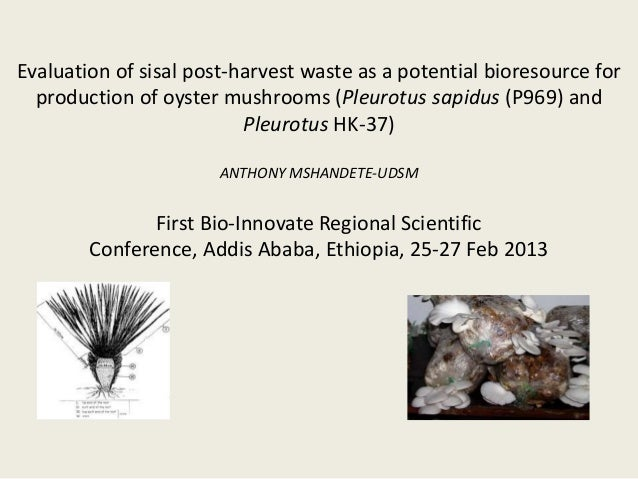 Evaluation of sisal post-harvest waste as a potential bioresource for  production of oyster mushrooms (Pleurotus sapidus (...