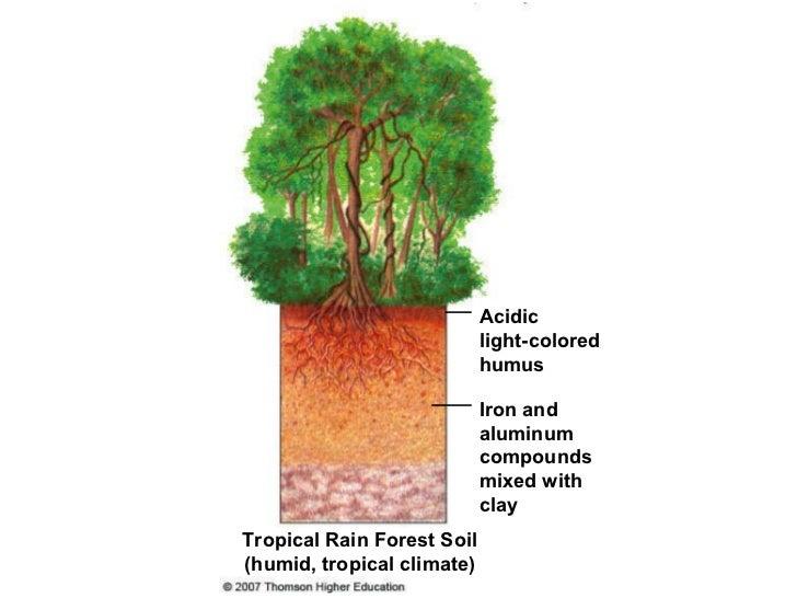 Tropical Rainforests by Sherjeel you on Prezi