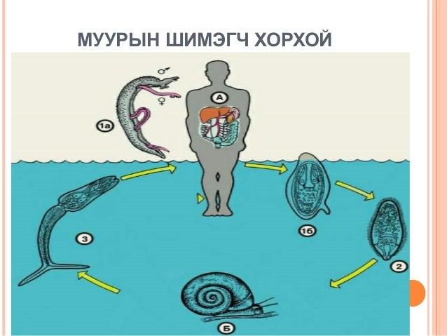 став от паразитов