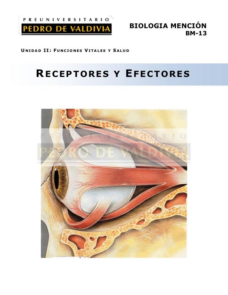 PDV: Biología Mención Guía N°13 [4° Medio] (2012)