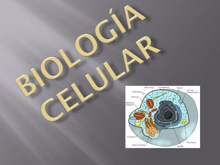 """   En 1839 Schleiden y Schwann, enunciaron: """"     Todos los seres vivos están constituidos por     células.""""    En 1855 ..."""
