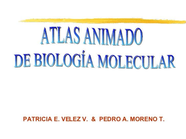 ATLAS ANIMADO DE BIOLOGÍA MOLECULAR  PATRICIA E. VELEZ V.  &  PEDRO A. MORENO T.