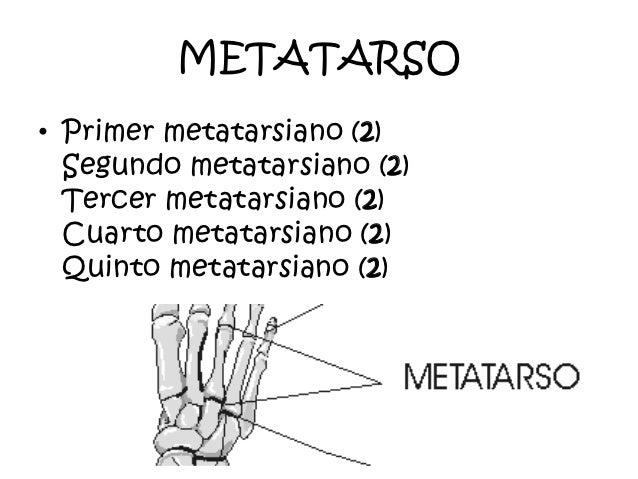 Biologia for Cuarto y quinto metatarsiano