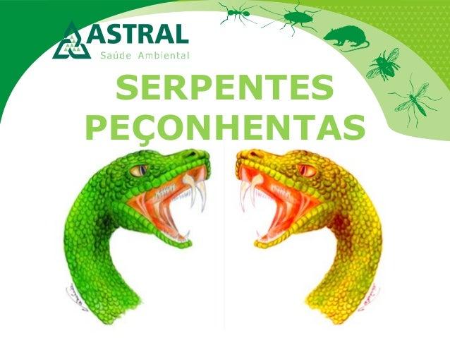 SERPENTES PEÇONHENTAS