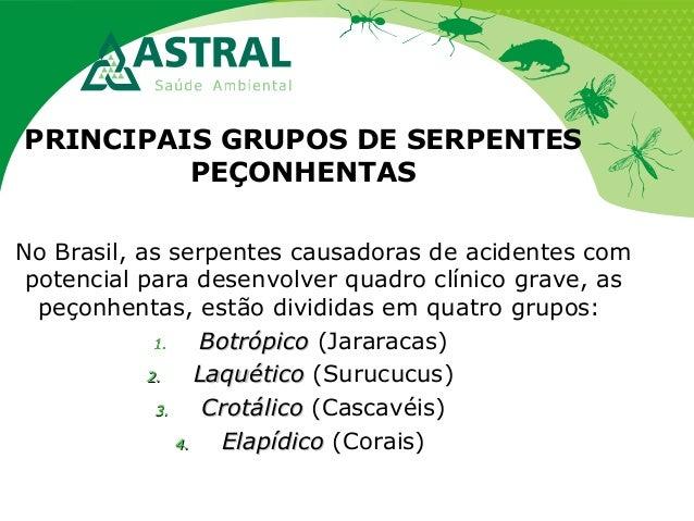 PRINCIPAIS GRUPOS DE SERPENTES PEÇONHENTAS No Brasil, as serpentes causadoras de acidentes com potencial para desenvolver ...