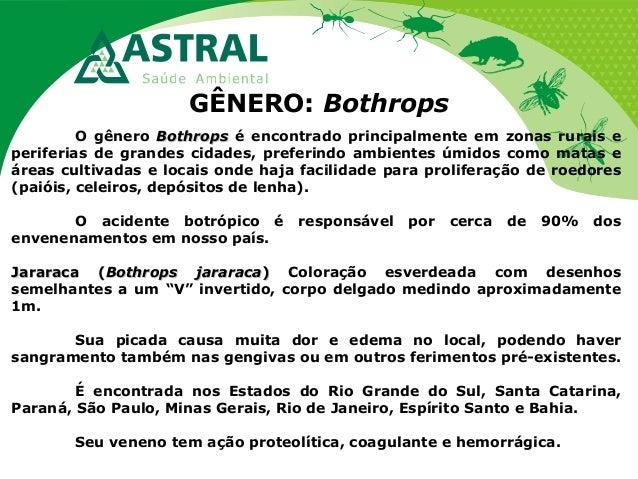 GÊNERO: Bothrops O gênero BothropsBothrops é encontrado principalmente em zonas rurais e periferias de grandes cidades, pr...