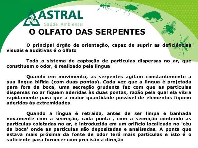 O OLFATO DAS SERPENTES O principal órgão de orientação, capaz de suprir as deficiências visuais e auditivas é o olfato Tod...