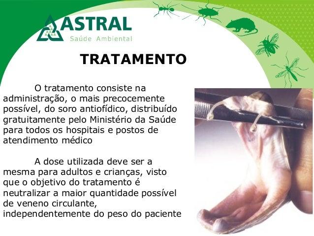 TRATAMENTO O tratamento consiste na administração, o mais precocemente possível, do soro antiofídico, distribuído gratuita...