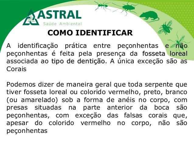COMO IDENTIFICAR A identificação prática entre peçonhentas e não peçonhentas é feita pela presença da fosseta lorealfosset...