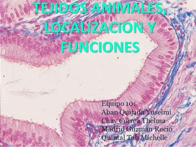 TEJIDOS ANIMALES, LOCALIZACION Y    FUNCIONES        Equipo 10:        Aban Quijada Yuselmi        Chay Correa Thelma     ...