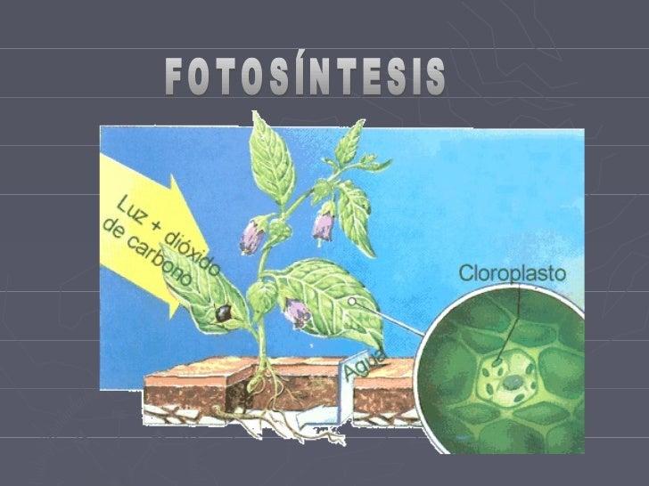 Biologia fotosintesis blog