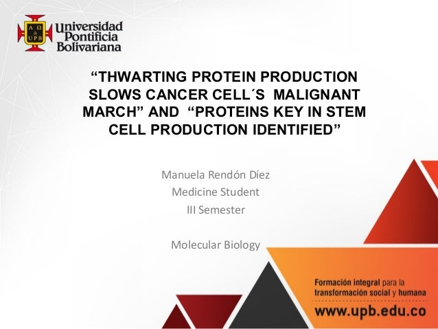 """""""THWARTING PROTEIN PRODUCTION SLOWS CANCER CELL´S MALIGNANT MARCH"""" AND """"PROTEINS KEY IN STEM CELL PRODUCTION IDENTIFIED"""" ..."""