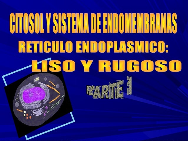 INTEGRADO POR:Retículo endoplásmico rugoso. Retículo endoplásmico liso.      Complejo de Golgi.   Lisosomas- Endosomas    ...