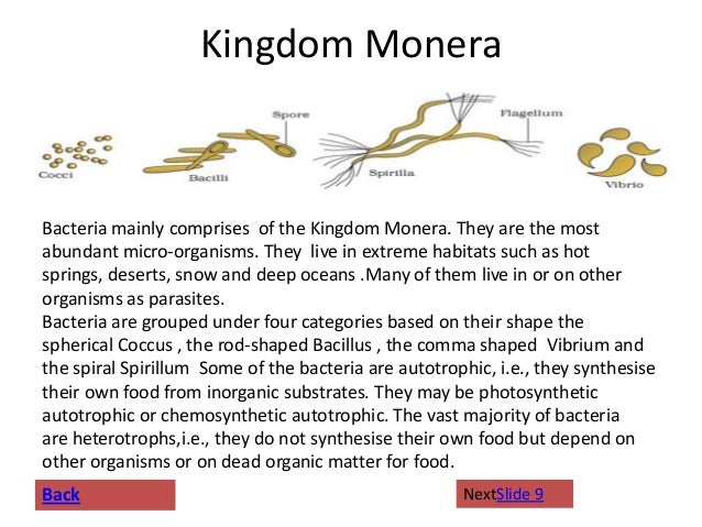 kingdom monera A taxonomic kingdom of prokaryotic organisms that typically reproduce by asexual budding or fission, comprising the bacteria, blue-green algae, and various primitive.