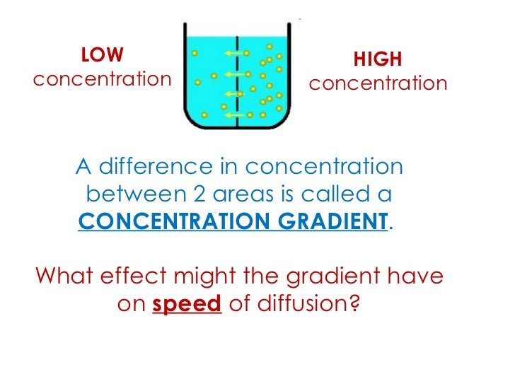 the effect of concentration gradient on Effect of concentration on rate of reaction  gradient of a volume vs time graph a graph of concentration vs rate derived from a set of experiments clearly.