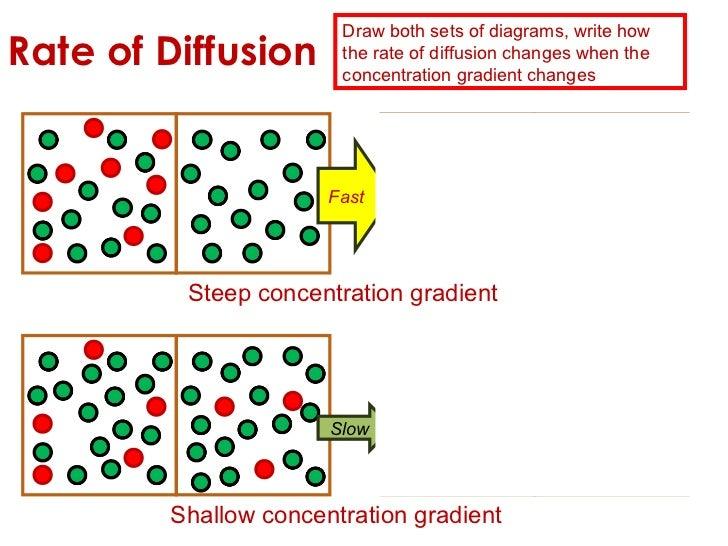 Diffusion Definition Ap Biology Essays