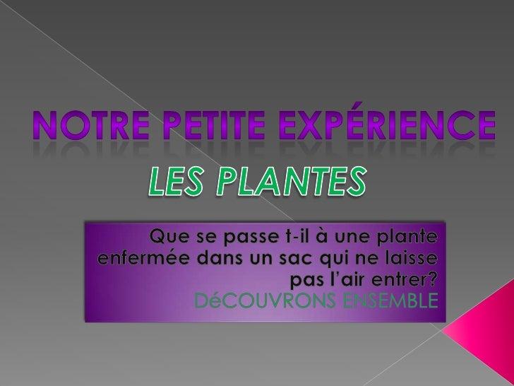L'OBSERVETION DE LA PLANTE AU PREMIER      JOURLa plante A le                         La plante Bpremier jour n'a         ...