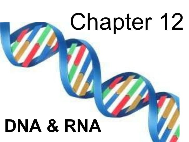 Biology - Chp 12 - DNA & RNA - PowerPoint