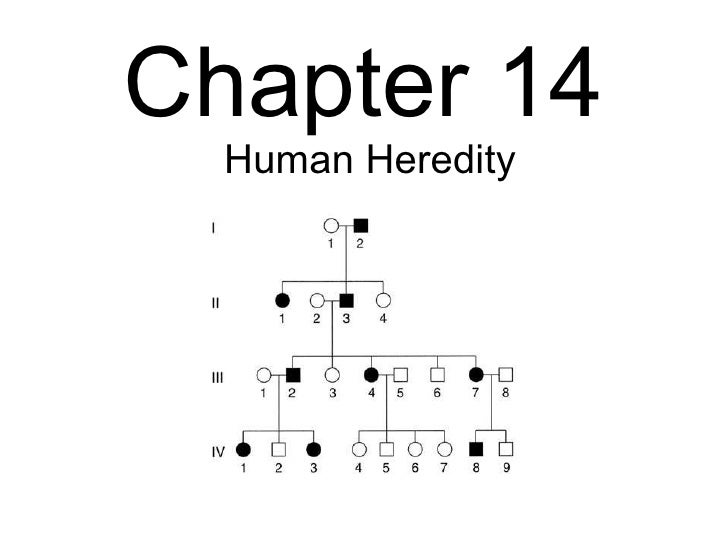 Biology - Chp 14 - Human Heredity - PowerPoint