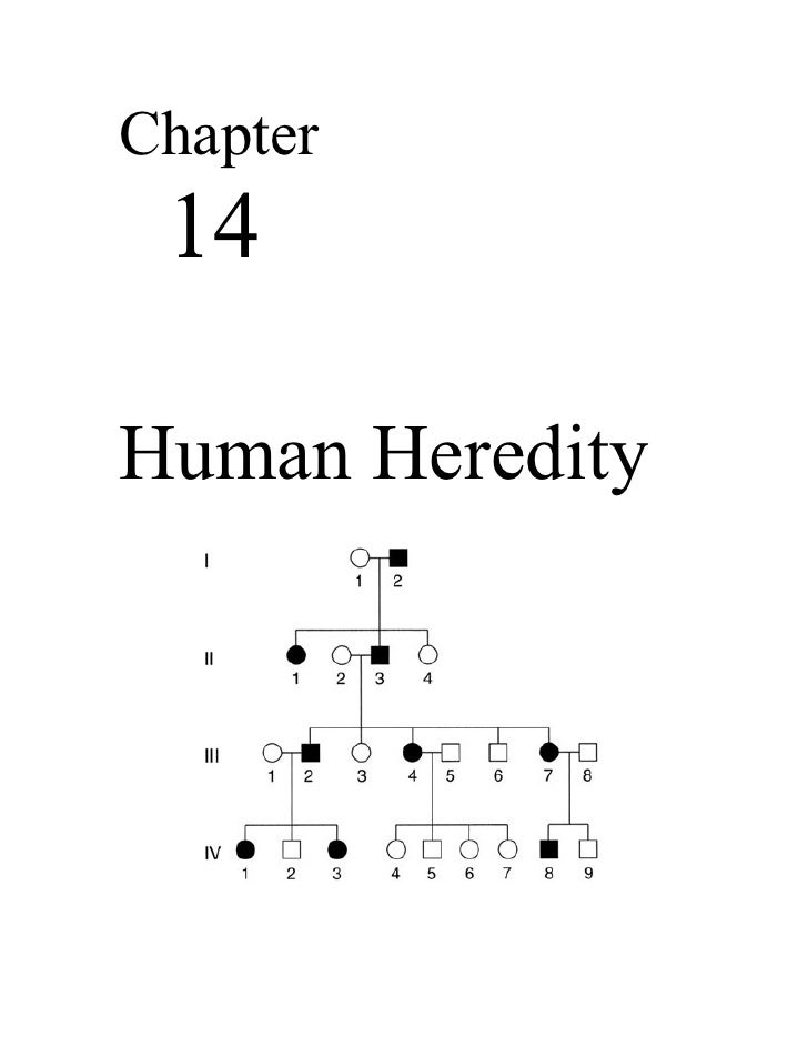 Chapter 14Human Heredity